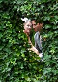 image of through the ivy